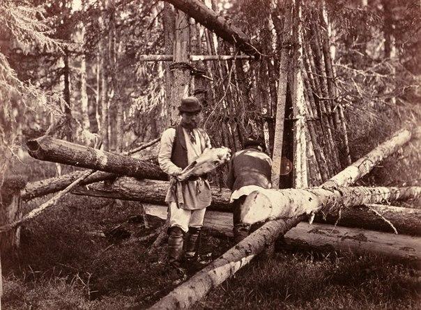 Охота на медведя, медведь, медведи Карелии, охота на медведя на берлоге, охота на медведя с рогатиной, охота на медведя на овсах, охота на медведя в древности, медвежья свадьба, ритуал охоты на медведя, как охотились на медведя на Руси, народные верования о медведе