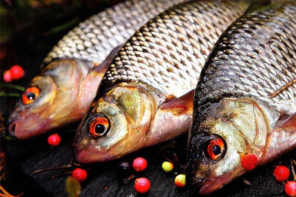 лучшая прикормка белой рыбы