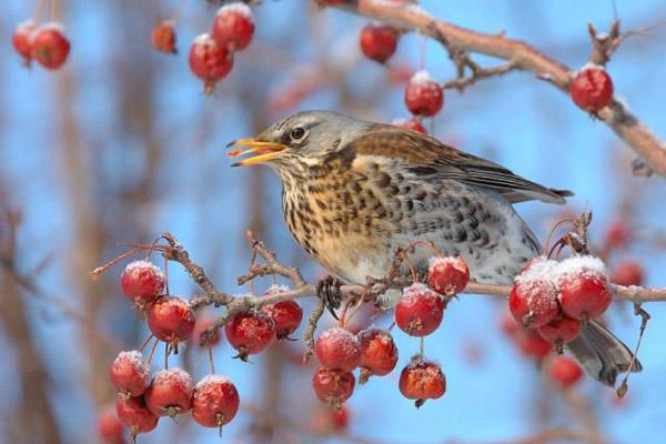 Приметы декабря, прогноз погоды на декабрь, народные приметы декабря, народные приметы о погоде, народные приметы зимой, народные приметы декабря, приметы на каждый день, народные приметы календарь