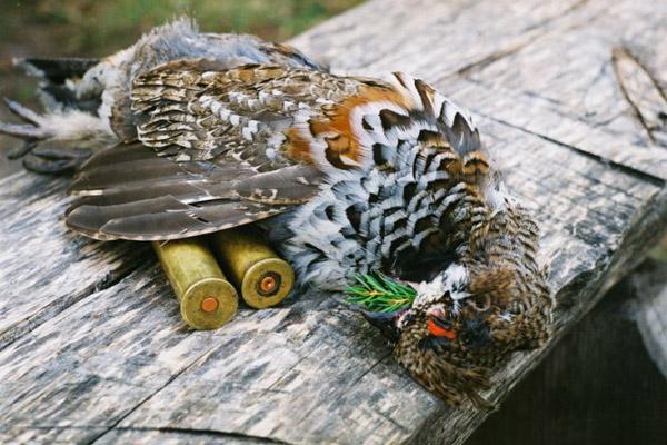 Охота на рябчика, охота на рябчика с манком, как манить рябчика, как стрелять рябчика, охота на рябчика с манком осенью, осенняя охота на рябчика, манок на рябчика
