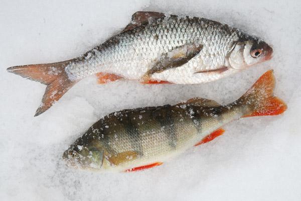 Рыбалка на волге и ахтубе, рыбалка в декабре, календарь рыболова для волги ахтубы, календарь клева рыбы для волги ахтубы, календарь рыболова на декабрь для волги, календарь рыболова декабрь астраханская область, ловля в декабре на волге ахтубе