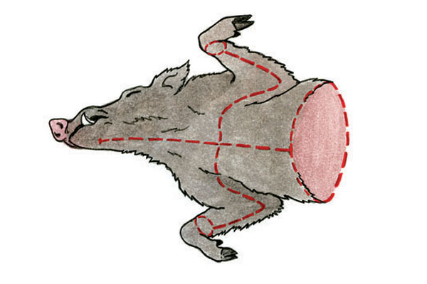 Как снять шкуру, схема снятия шкуры, шкура животного, схема съема шкуры картинки, как правильно снимать шкуру, как хранить шкуру, как перевозить шкуру, шкура для трофея, таксидермия, изготовление чучела, консервация шкур, схемы разделки шкур фото