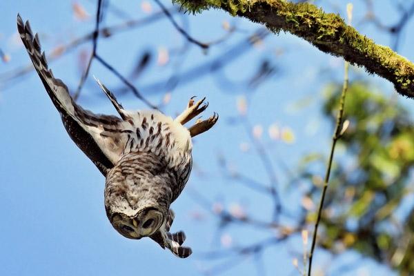 Совы и поверья, связанные с совами: Откуда у совы связь с ведьмами и лешими