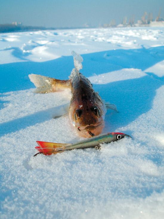 ловля судак в январе
