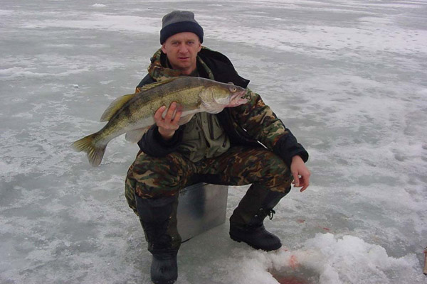 Как ловить судака в январе