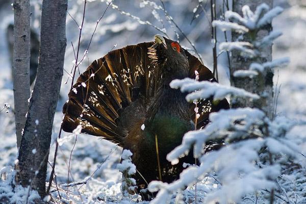 Календарь охотника на февраль, календарь охотника февраль 2014, охота в феврале, открытие охоты в феврале, закрытие охоты в феврале, охота на кабана в феврале, на кого охотиться в феврале, календарь охотника на февраль 2014, охотничий календарь на февраль, охота на пушных в феврале
