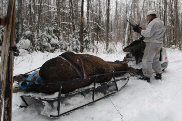 Cроки охоты в Cамарской области 2014: На кого можно охотиться в Самарской области сейчас