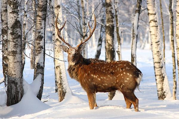 Календарь охотника на декабрь, календарь охотника декабрь 2016, охота в декабре, закрытие охоты в декабре, охота на лося в декабре, охота на оленя в декабре, охота на медведя в декабре, охота на кабана в декабре, охота на глухаря в декабре, охота на тетерева в декабре, на кого охотиться в декабре, календарь охотника на декабрь 2016, охотничий календарь на декабрь