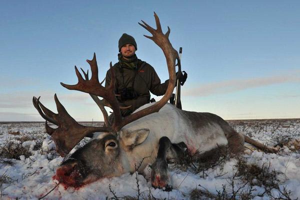 Охота на северного оленя, дикий северный олень, олень северный, охота на северного оленя видео, как охотятся на северного оленя, рога северного оленя, охота на дикого северного оленя фото