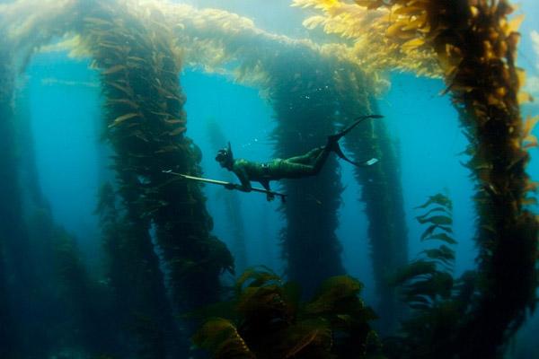 Подводная охота, подводное плавание, обучение подводной охоте, положение тела пловца, как научиться плавать