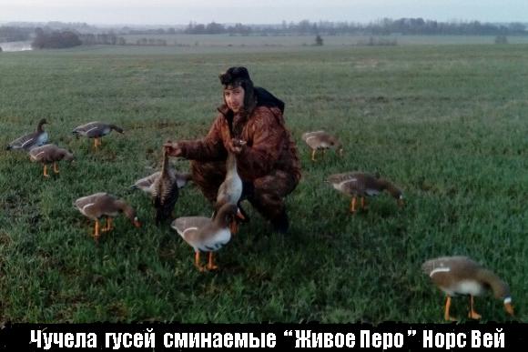 Весенняя травля 0017, обнаружение весенней охоты 0017, сроки весенней охоты 0017, весенняя травля получай утку 0017, весенняя неймется держи гуся 0017, время года весенней охоты 0017, выявление весенней охоты в области
