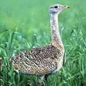Календарь охотника июнь 2015, охота, календарь охотника на июнь, охота в июне, жизнь зверей в июне, жизнь птиц в июне