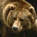 Календарь охотника на август, календарь охотника август 2017, охота в августе, открытие осенней охоты 2017, охота на утку в августе, охота на гуся, охота на кабана в августе, охота на медведя в августе, открытие охоты на водоплавающую дичь, на кого охотиться в августе, календарь охотника на август 2017