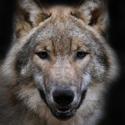 Календарь охотника на сентябрь, календарь охотника сентябрь 2015, охота в сентябре, открытие осенней охоты в сентябре, охота на утку в сентябре, охота на гуся в сентябре, охота на лося в сентябре, охота на оленя в сентябре, охота на медведя в сентябре, охота на кабана в сентябре, на кого охотиться в сентябре, календарь охотника на сентябрь 2015, охотничий календарь на сентябрь
