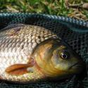 какая рыба клюет в июле
