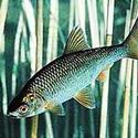 Календарь клева рыбы в мае, рыбалка, какая рыба клюет в мае, как рыба клюет в мае, календарь рыболова май 2018, на что ловить рыбу в мае,  где ловить рыбу в мае, как ловить щуку в мае, на что ловить щуку в мае, как ловить голавля, язя в мае, на что ловить карася, плотву в мае