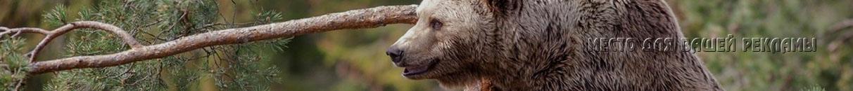 весенняя охота 2015, сроки весенней охоты 2015, открытие весенней охоты 2015