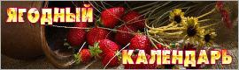 Календарь ягодника, сбор ягод, когда собирать ягоды