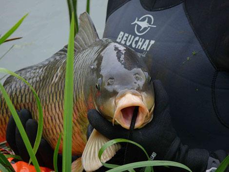 Подводная охота - уважая рыбу: Философия подводного охотника