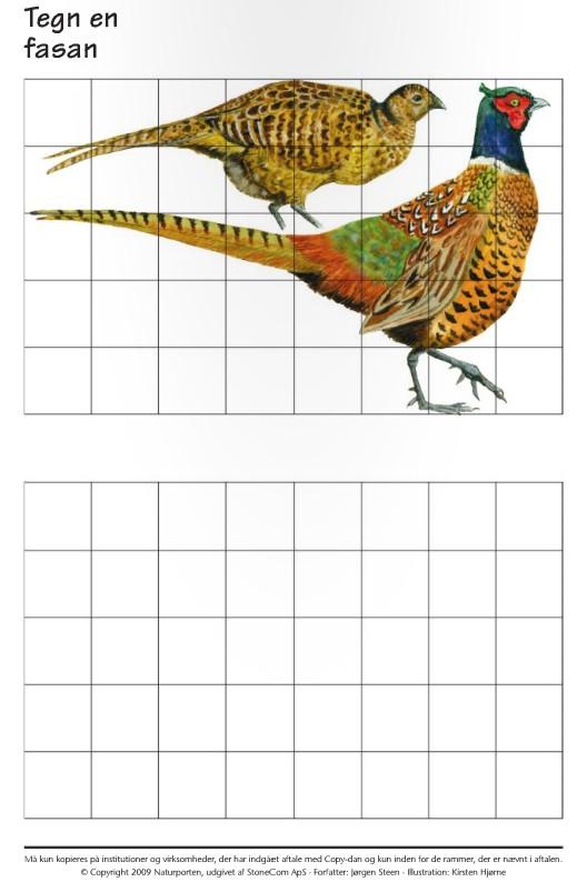 Блокнот для зарисовок натуралиста - Птицы