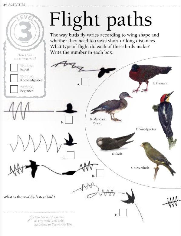 DK Eyewitness Bird