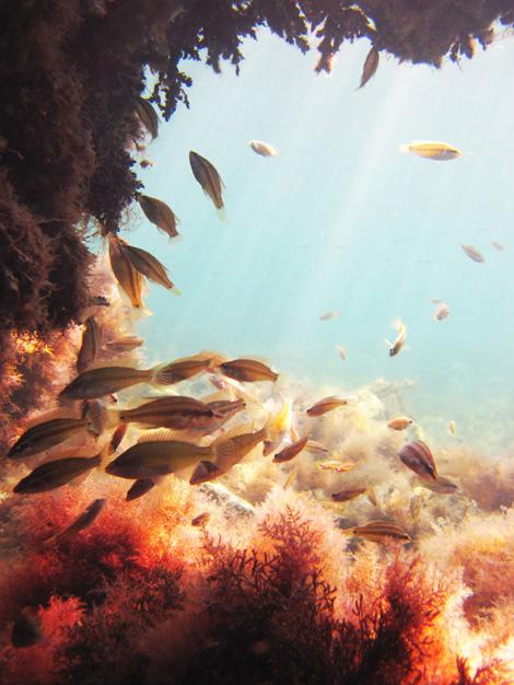 День Черного моря, междуннародный день Черного моря, Черное море, рыбалка на Черном море, ядовитые рыбы Черного моря, скорпена, морской ерш, морской дракончик, Черное море видео, 31 октября день Черного моря