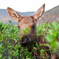 Календарь охотника, охотничий календарь, календарь охотника на апрель, календарь охотника на август