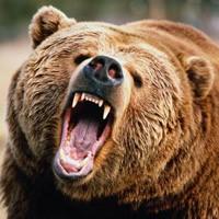 Охота на медведя в томской области