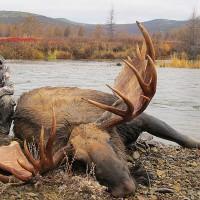 Сезон охоты в тульской области