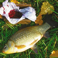 какая рыба клюет в ноябре в астрахани
