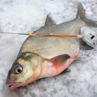 Рыбалка в декабре, ловля рыбы в декабре, где ловить рыбу в декабре, какую рыбу ловить в декабре, рыбалка в декабре на щуку, рыбалка в декабре на леща, рыбалка в декабре на налима, рыбалка в декабре на окуня, рыбалка в декабре на судака, рыбалка в декабре на карася, рыбалка в декабре на язя, рыбалка в декабре на голавля