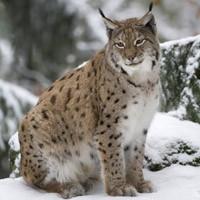 Календарь охотника на февраль