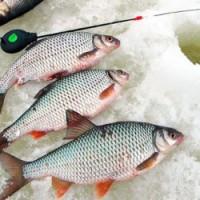 Рыбалка на судака по последнему льду