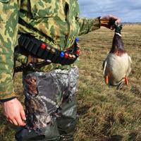 Весенняя охота 2014, открытие весенней охоты 2014, сроки весенней охоты 2014, весенняя охота на утку 2014, весенняя охота