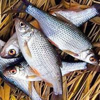 Рыбалка в марте, ловля в марте, рыбалка в марте на щуку, рыбалка в марте на окуня, рыбалка в марте на судака, рыбалка в марте на плотву