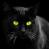 Фото картинки черных котов