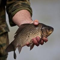какую рыбу нельзя при высоком холестерине