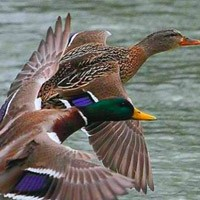 Весенняя охота 2015, сроки весенней охоты 2015