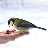 День птиц, международный день птиц, охрана птиц, 1 апреля день птиц, день птиц празднуют в апреле, празднование дня птиц