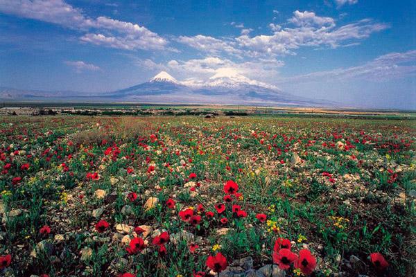 Отдых в Армении,, тур в Армению, туризм в Армении, поездка в Армению, путешествие в Армению, гора Арарат в Армении, природа Армении, кухня Армении