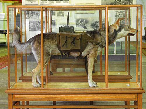 Собаки на войне, собачья война, Джульбарс, кинологи, Мазовер, собаки в войне, собаки на Параде Победы, собаки в Великой Отечественной войне, служебное собаководство, собаководство в РККА, военные собаки, ездовые собаки, санитарные собаки