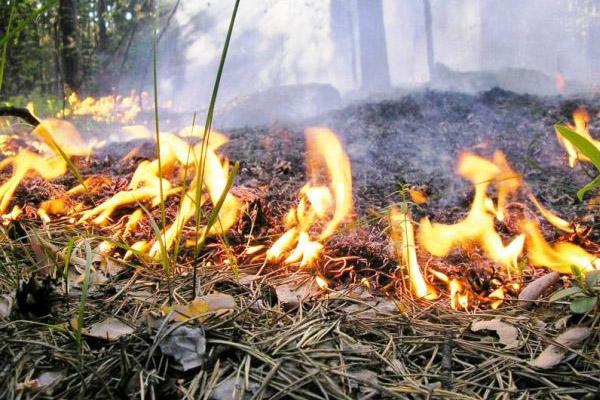 Ответственность за разжигание костра во дворе жилого дома