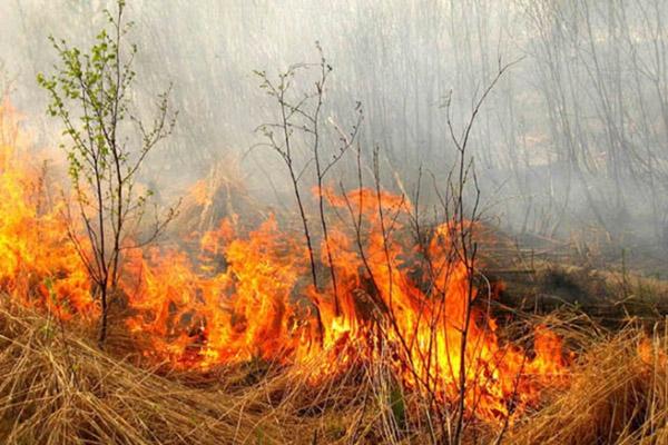 Охота, пожар, Лесной кодекс, тушение пожаров, пожар в лесу, охрана лесов от пожара, Минприроды, тушение пожаров, лесной пожар, поправки в Лесной кодекс
