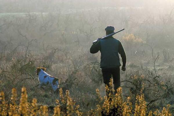 Осенняя охота, сезон осенней охоты, сроки осенней охоты 2014