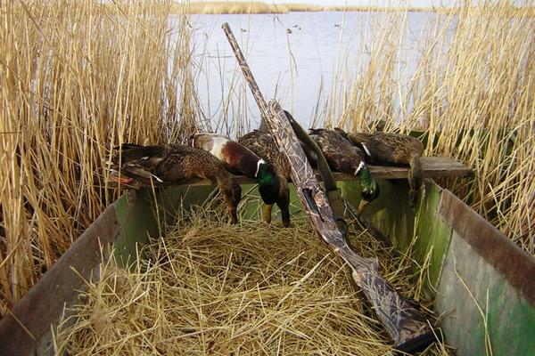 Охота на утку, как охотиться на утку, охота на уток, охота на утку с чучелами, охота на утку с профилями, охота на утку с манком