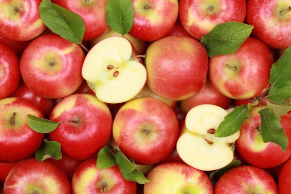 Польские яблоки с сербскими документами: в Нижегородской области остановлен нелегальный груз