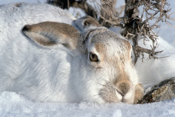 охота, охота в Чувашии, на кого можно охотиться в Чувашии, охота на зайца в Чувашии, охота на копытных в Чувашии, охота на пушных в Чувашии, охота на медведя в Чувашии, сроки охоты в Чувашии
